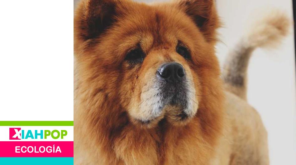 China busca prohibir el consumo de carne de perro y gato